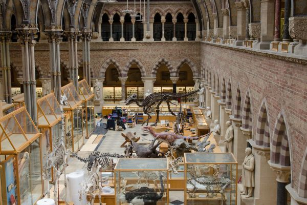 Oxford University Museum Of Natural History Civic Trust